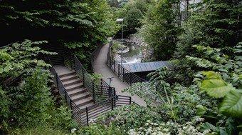 Liten sti i skogen med trapper og kort bro